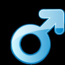 Мъжка полова система